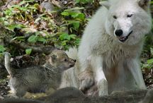 I <3 Wolfs