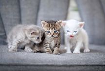 ~ meow ~