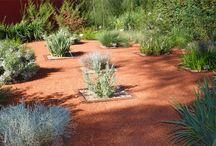 Australian native / garden design