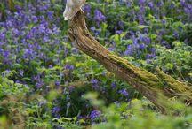 I owl u