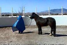Paarden praatjes