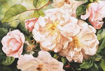 Flower paintings by Susan Harrison-Tustain / I love to create floral paintings that look as if you could reach in and touch the petals - smell the perfume or cup the bloom in your hands. It is a little like having a bees eye view of the flowers. I hope you enjoy them as much as I loved painting them.