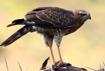 Sanbona Wildlife Reserve, Western Cape / South Africa