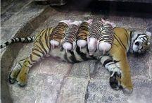 Surrogate Mommies