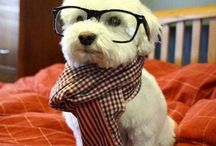 loveable dogs and  cute animals