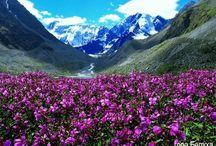 Алтай гора Белуха