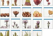 Kunstblumen - Kunstpflanzen - täuschend echt / Kunstblumen, deren Optik den nätürlich gewachsenen Pflanzen nahe kommen