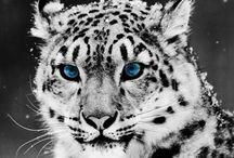 Animals / by Vera Tombak