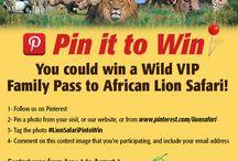 Lion Safariii