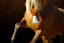 Horses - 9th Wonders of the World ♡ / by Shawnae Randolph