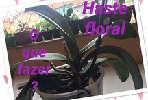 corte haste orquideas