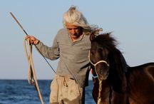 www.Skyros Island Horse Trust. com    Katsarelias Simpson Project / Skyros Pony  skyrian horses/ skyrian alogaki