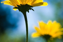 Spring/summer pics / by Sandy Laca