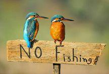 Fishing / Bukan orang kaya,tapi hobi kami mahal