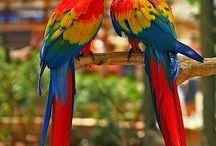 porrots