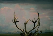 Antlers / by K