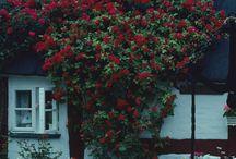 Klubbo trädgård