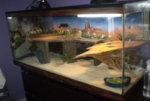 Reptile tanks and decorations ideas