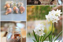 home & garden inspiration