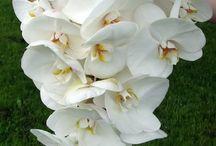 wedding bouquetes with orchids / νυφικά μπουκέτα με ορχιδέες