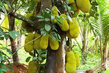 Fruit tree garden