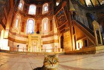 İstanbul'un kedileri - Istanbul's cats