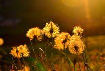 Flores, florcitas, plantas, plantitas... / natural