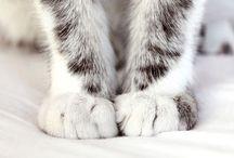 Cats / by Amarins Yntema