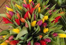 flowers / by Ivana Gogoski