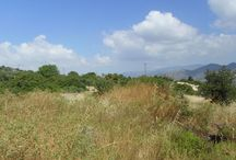 Code No.7377 A agricultural land for sale in the Parekklisia area in Limassol. / Code No.7377 A agricultural land for sale in the Parekklisia area in Limassol.  The land has an area of +/-1173 m², with 10% build factor, 10% cover ratio and permission to build up to 2 floors.  The land has easy access to the highway. It has distance from the town of Limassol 10km or 10 minutes. Has full share of title deeds.  Has a large face, flat surface. Adjacent to road public. Code Νο: 7377 Selling price: €55.000
