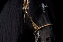 kone / o zvieratách