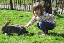 Hoppington Green / 2015 addition with 6 Giant Flemish Rabbits - proves a massive hit with visitors.