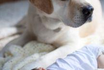 σκυλοι κ μωρα