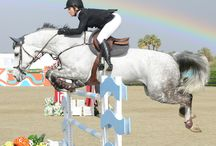 jumps for show jumping