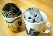Najlepsa kawa
