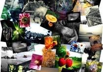 Mes photos / Découvrez les photographies de l'artiste Mik-Art.