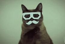 Nyan = ^. .^ = / Álmomban két macska voltam és játszottam egymással.