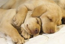 Dogs / by Healthy Abundant Living Holistic Solutions for Mind, Body and Spirit