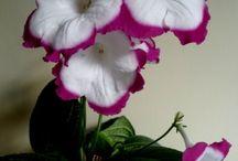 Plants/blommor