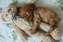 I love dogs! / by Cheryl Dobbins