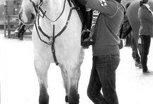 konie ludzie