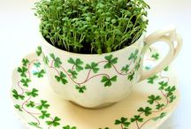 Because I'm Irish / by Danielle Burrows Reed