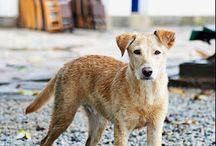 """Das Ruas - Uma vida Vira Lata / Vou aqui tentar vender meu peixe, na verdade cachorros e tentar descolar ajuda e conseguir """"verba"""" para finalizar projeto """"Das Ruas - Uma Vida Vira-Lata"""".  Para quem não sabe """"Das Ruas"""" é um livro somente de fotos de cães vira-lata por muitos lugares do Brasil, Chile e por ai vai.  O trabalho já está com 3 anos e acumula uma coleção de 400 cachorros diferentes em lugares diferentes, mas apenas 150 irão para o livro.  Help us. Please !"""