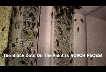 Tampa German Roach Exterminator / Problem jobs like this is where we shine at delivering customers the results that they expect and within a realistic timeframe too. Call today! 813-994-1166