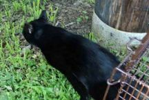 Feral cat TNR RTF / Share all the news about saving lives of community cats.