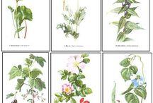 Plevele - zastávka