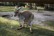 Australia / Fotografias que ilustram os artigos do Territorios.com.br. Clicadas por mim e colaboradores