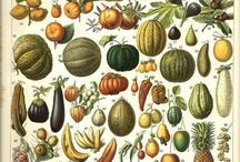 Botanical Reference