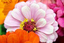 flowers for joy / bloemen en vogels