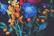 barvy/colors